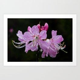 Pink Shell Azalea Flower close up, Fine Art Nature Print, Floral Art Art Print