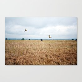 African Safari.  Canvas Print