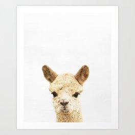 Alpaca, Baby, Animal, ZOO, Nursery, Minimal, Modern, Wall art Art Print Art Print