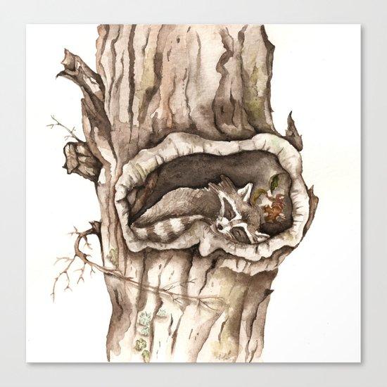 Sleeping Raccoon in Tree Hollow Canvas Print