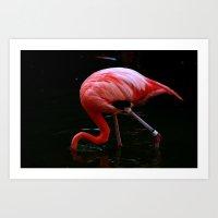 Flamingo in Water Art Print