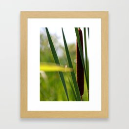 Cat Tails In The Wind Framed Art Print