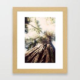 Too Tall Tree Framed Art Print