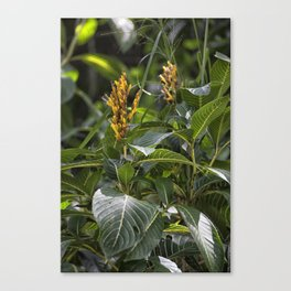 Yellow flower in the rain forest Canvas Print