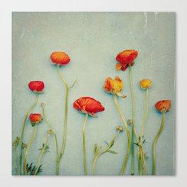 Red Ranunculus Flowers Canvas Print