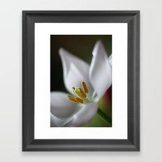 Tulip Beauty Framed Art Print