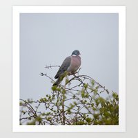 pigeon Art Prints featuring Pigeon by Imager