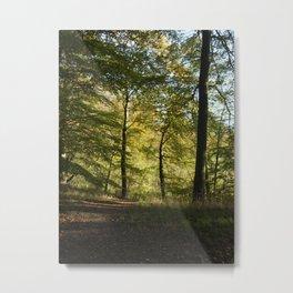 Beech Forest 2  Metal Print