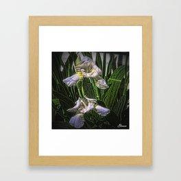 Morning Beauties Framed Art Print