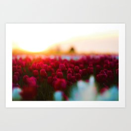 Spring Tulip Fields Art Print