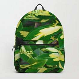 Euonymus Blondy Shrub-2 Backpack