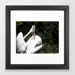 Peli-canyouseeme Framed Art Print