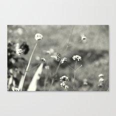 Rarity Canvas Print