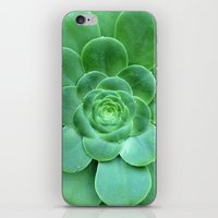 succulent iPhone & iPod Skins featuring Succulent  by Laura Ruth