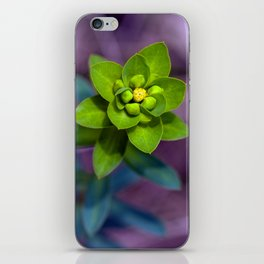 Wild euphorbia 31 iPhone Skin