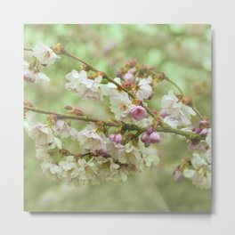 for willow Metal Print