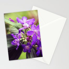 Longwood Gardens Autumn Series 305 Stationery Cards