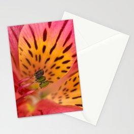 Peruvian Lily Macro Stationery Cards
