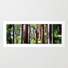Australian Native Coastal Rainforest Art Print