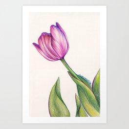 Purple Tulip in Colored Pencil Art Print