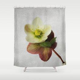 Vintage Helleborus  - JUSTART © Shower Curtain
