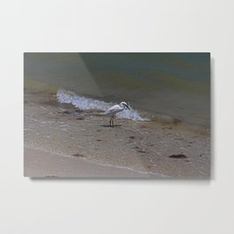 Lunchtime on Sanibel Metal Print