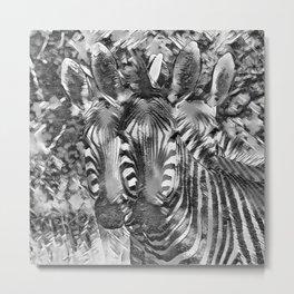 AnimalArtBW_Zebra_20170701_by_JAMColorsSpecial Metal Print