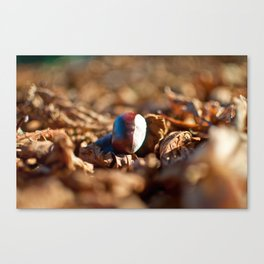 The Last Conker Canvas Print