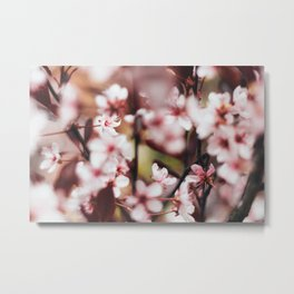 Blooming Blossom Detail Metal Print