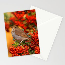 Hermit Thrush on the Scarlet Firethorn Stationery Cards