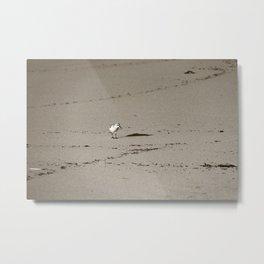 Little bird walking Metal Print
