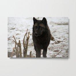 Wolves II  Metal Print