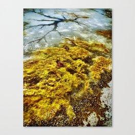 Frozen Rivers Canvas Print