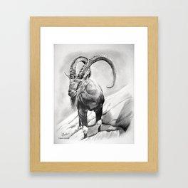 Cabra Framed Art Print