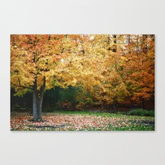 Beautiful Fall Trees Canvas Print