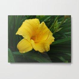 Daylily flower Metal Print