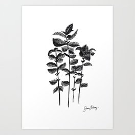 Basil herb black and white pencil and ink sketch of Basil, by Jason Callaway Art Print