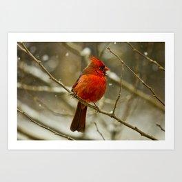Wintry Cardinal Art Print