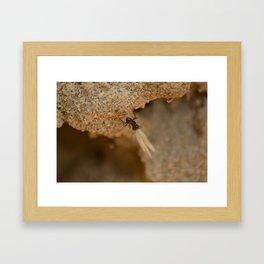 Romantic Ant Framed Art Print