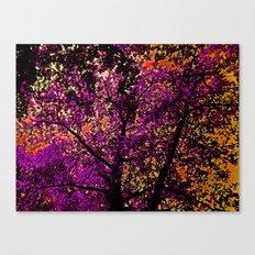The Sky was Ablaze  Canvas Print