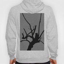If Roy Moore Was A Tree, What Kind Of Tree Would He Be? Hoody