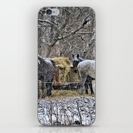 Feeding in The Snow iPhone Skin