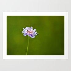 Pincushion Flower Art Print