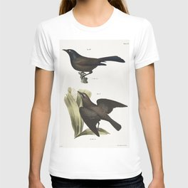 49 The Common Crow Blackbird (Quiscalus versicolor) 50 The Rusty Crow Blackbird (Quicalus ferrugineu T-shirt