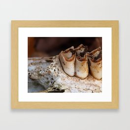 jawbone IV Framed Art Print