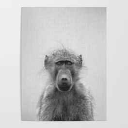 Baboon - Black & White Poster