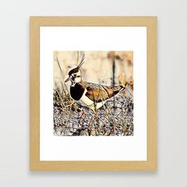 Lapwing Framed Art Print