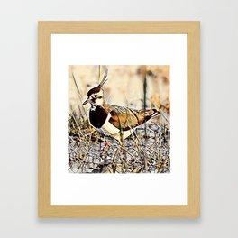Lapwing Framed Art Print