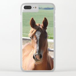 Horse Friends Photography Print Clear iPhone Case