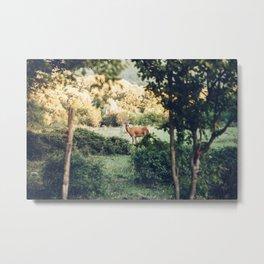 Lone Deer Metal Print